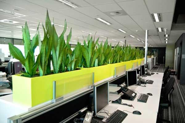Thiết kế văn phòng làm việc không gian mở với mảng xanh đầy sức sống