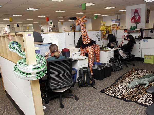 """Thiết kế văn phòng làm việc như """"sở thú"""""""