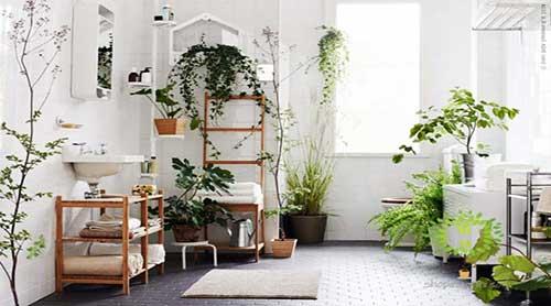 Nên đặt cây gì trong phòng vệ sinh? Nội dung tiếp theo trong bài sẽ cho bạn câu trả lời