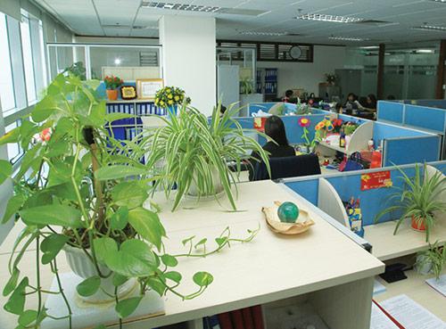 Thực trạng thiết kế văn phòng xanh hiện nay